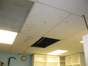 Ceiling Tiles BEFORE